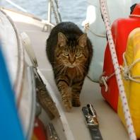 Leo doing his rounds. He likes to lap the boat. I don't know why.