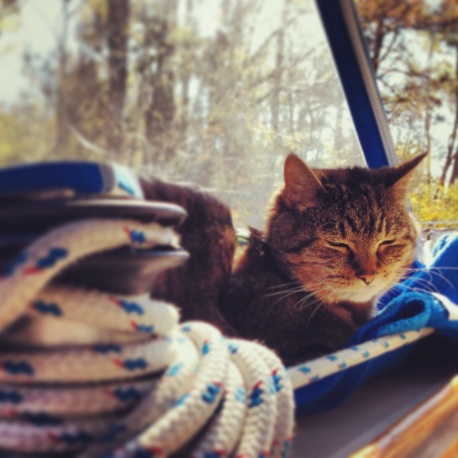 The Dismal Swamp was Leo's kind of sailing.  No heeling, no waves, and a purring motor.  He finally decided he liked hanging with us on the deck.
