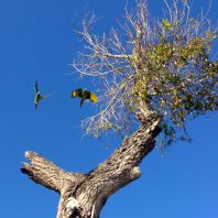 Saw these guys walking back to the marina. Just some random parrots flying around!