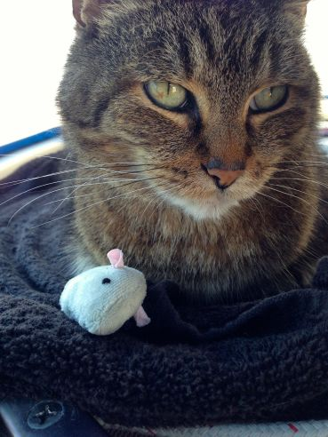"""I love my new mouse, and my new Auntie Natalie.""  -Leo"