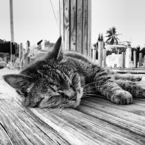 Leo got very comfortable on the docks at Blue Water. He eventually made his way to actual land to munch on some Bahamian grass. More often than not, he jumped on the dock to take an afternoon snooze or to mosey on over to visit his Auntie Theresa and Uncle Wade <3