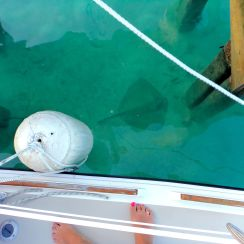 Here's a stingray just hangin' out under our boat.