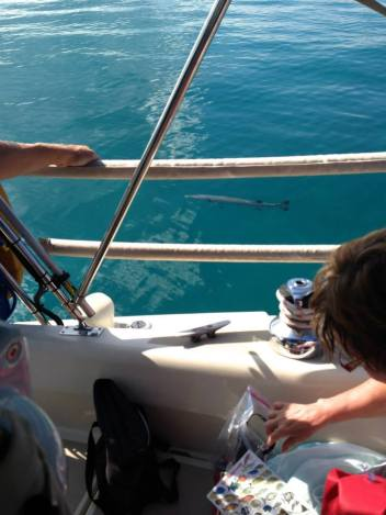 Oh you know, just a barracuda swimming around our boat!