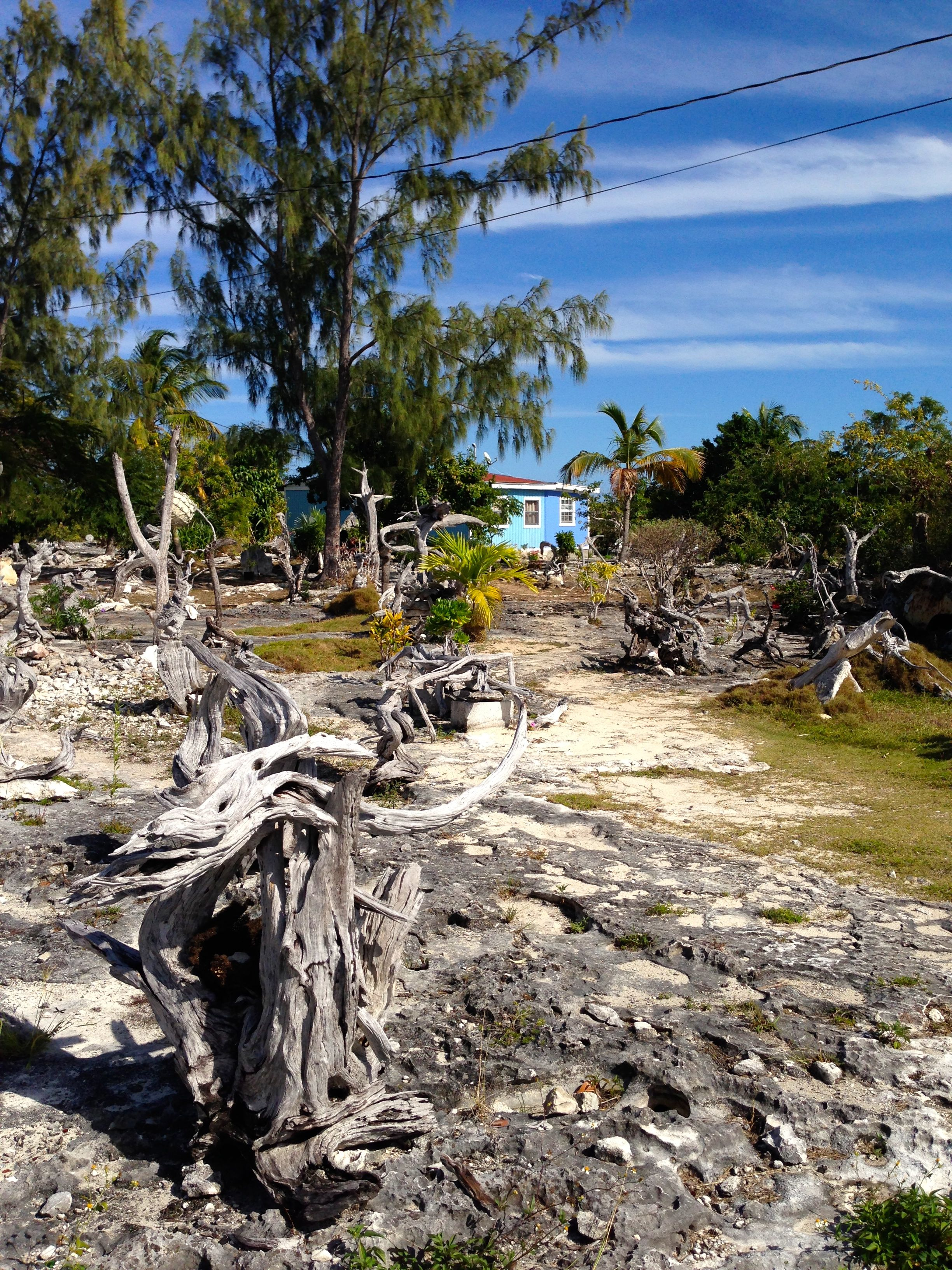 Westerly worries staniel cay to great exuma georgetown for Driftwood sculptures for garden