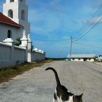"""A nice cat at St. Paul's Anglican Church. Google """"Father Jerome."""" He built this church and St. Peter's and has a rather colorful history!"""