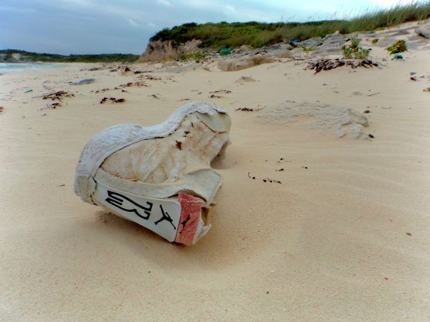 The things you find on the beach of a barrier island!