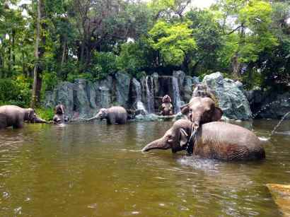 Oh you know, just some elephants playing in the river...