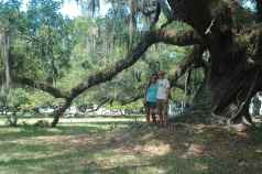 This live oak was BIG!