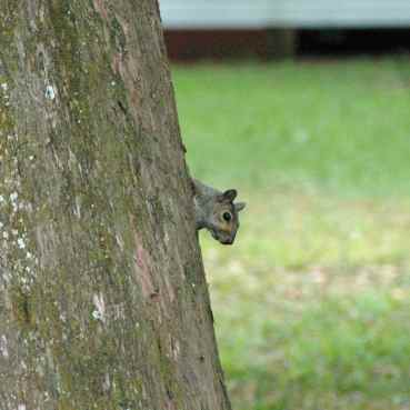 Critter #9. A squirrel!