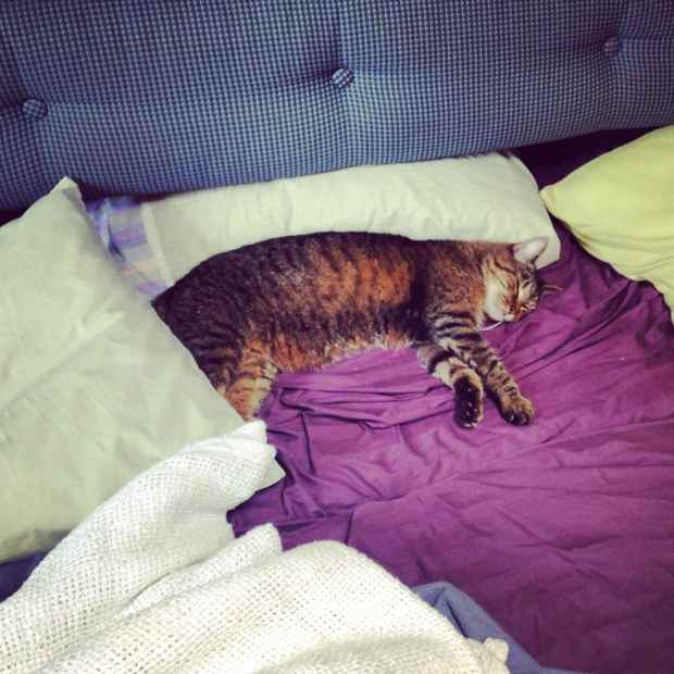 Leo, nice and comfortable on our overnight to Fernandina Beach, Florida, June 2014.