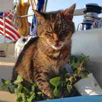 First order of business was to get us some bikes and a new catnip plant for Leo. This is Leo on nip.