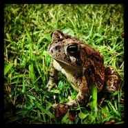 A frog at Jason's.