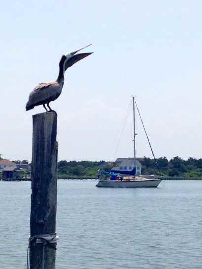A silly pelican and Journey.