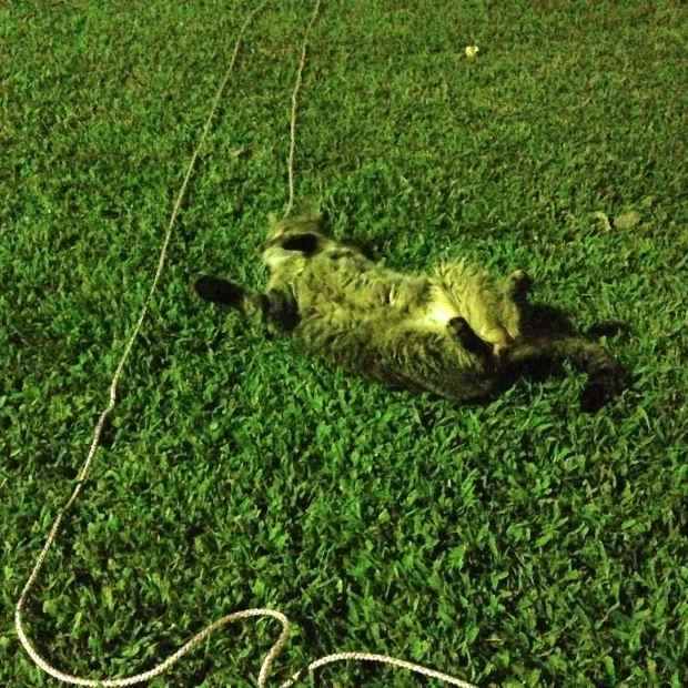 Leo enjoying some night-time outside time.  Yup, that's a leash!
