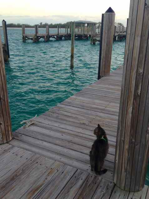 Leo enjoying his dock time in Bimini, Bahamas, January, 2014.