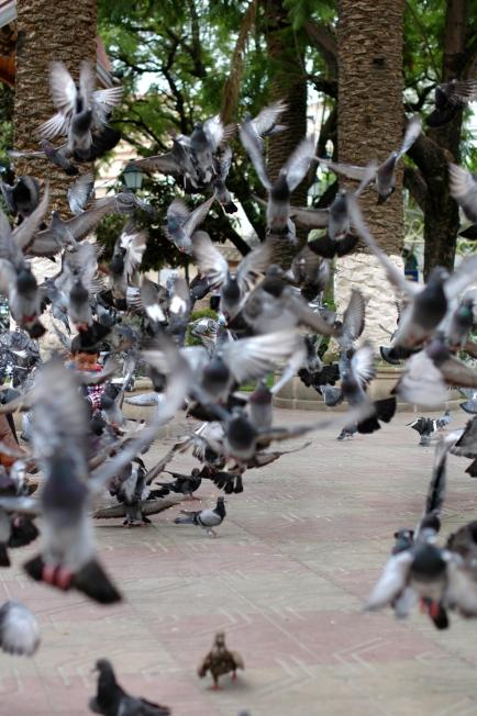 One of the plazas in Tarija.