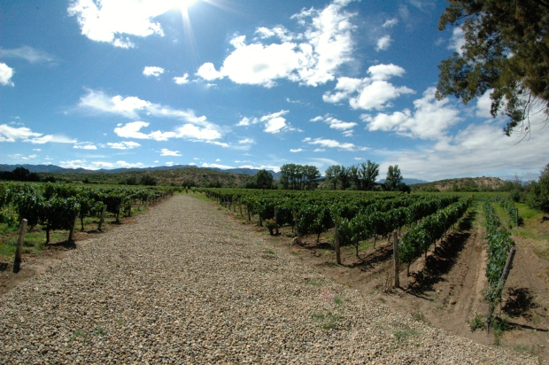 Tarija - We took a tour of a few of the many wineries in Tarija. The views were beautiful!