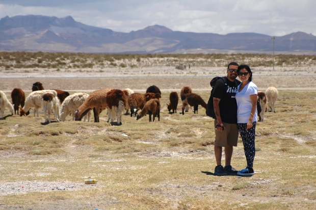 Flavia and Marco with the llamas <3